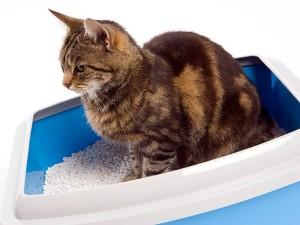 79168075-cat-litter-box-location-632x475
